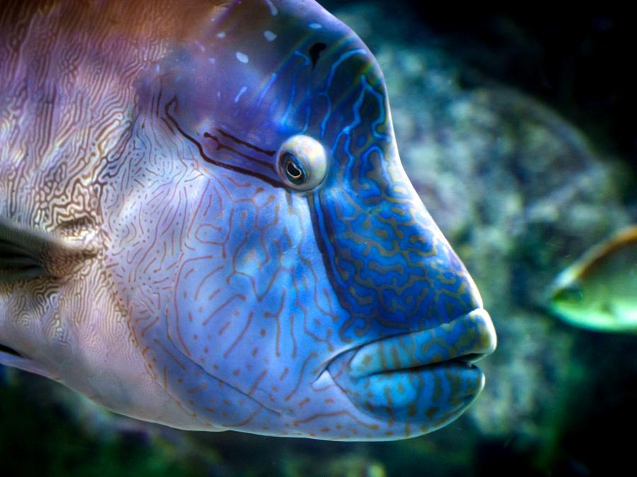 stage-photo-collectif-montpellier-aquarium-poisson-multicolore