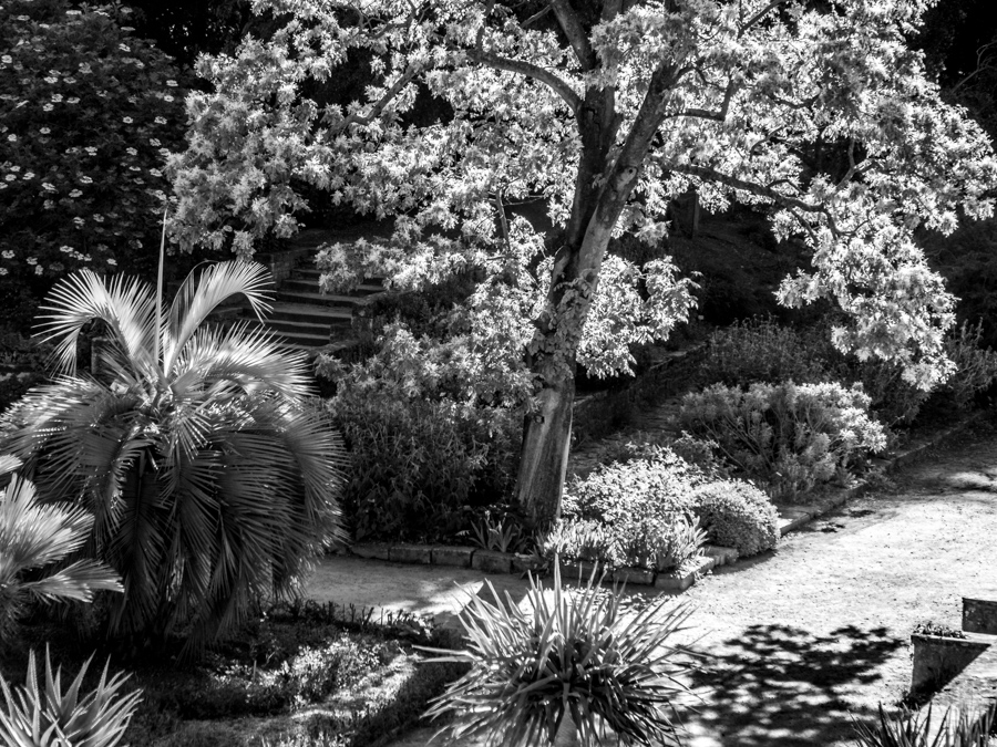 stage-photo-debutant-montpellier-jardin-des-plantes
