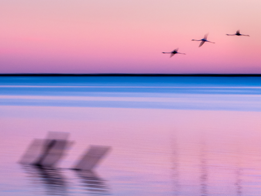 stage-photo-montpellier-etang-flamant-rose-en-vol